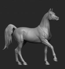 Horse №11